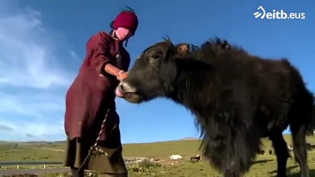 Tibeteko nomadek hirietatik urrun jarraitu nahi dute