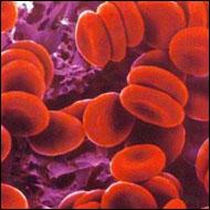 Ahotiko antikoagulazioa. Sekuentzia